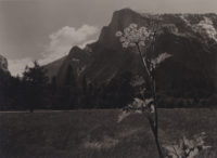 "Ansel Adams, Half Dome with Anise Plant in Foreground, c1935, vintage print, 8"" x 10"""