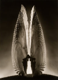 "Ruth Bernhard, Angel Wings, 1943, Gelatin Silver Print - 20"" x 16"" and Platinum Print - 8"" x 5"""