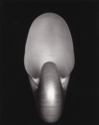 Edward Weston, Shell (1S), 1927, printed 1980s by Cole Weston
