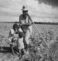 Marion Post Wolcott, Taking a Drink and Resting from Hoeing Cotton, 1941