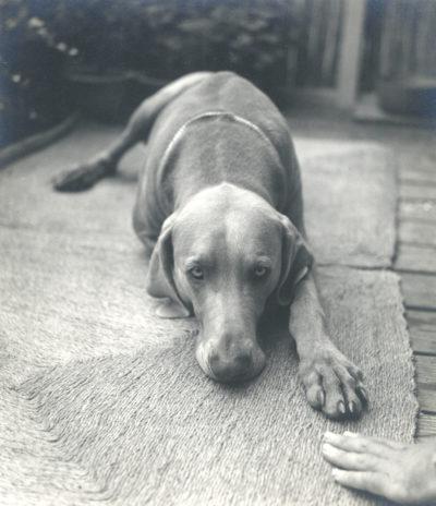 Imogen Cunningham, Veo 1, 1955