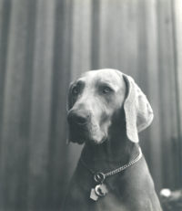 Imogen Cunningham, Veo 10, 1955