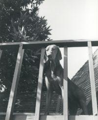 Imogen Cunningham, Veo 16, 1955