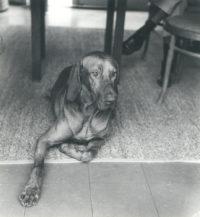 Imogen Cunningham, Veo 17, 1955