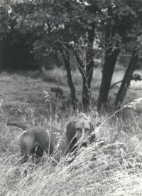 Imogen Cunningham, Veo 2, 1955