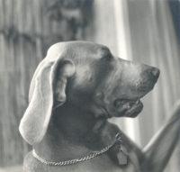 Imogen Cunningham, Veo 21, 1955