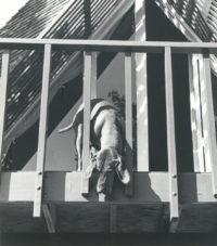 Imogen Cunningham, Veo 3, 1955