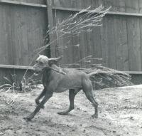 Imogen Cunningham, Veo 5, 1955