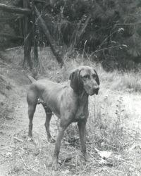 Imogen Cunningham, Veo 8, 1955