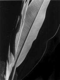Rubber Plant, 1929