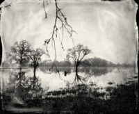 Ben Nixon, Flooded Oaks, 2010