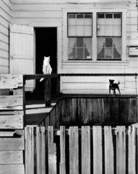 Bill Heck, Dog and Cat, Mendocino, California, 1947